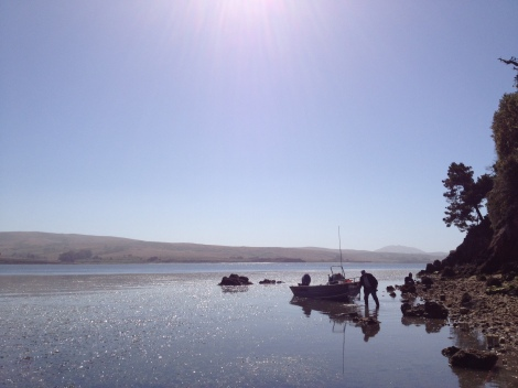 Estuaries such as Tomales Bay (just north of San Francisco Bay) exhibit sharp gradients in environmental conditions (e.g. temperature, salinity) that can alter the interaction among predators and prey.